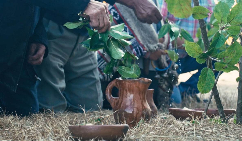 ceremonia mapuche newen2